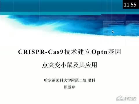 CRISPR/Cas9技术建立Optn基因点突变小鼠及其应用
