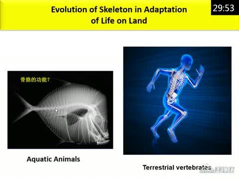 骨细胞偶联机制研究进展